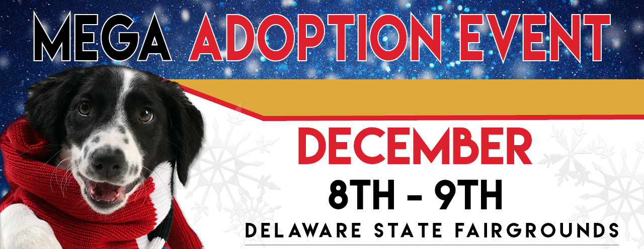 2018 Mega Adoption